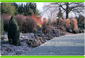 Leicester Winter Gardening Services