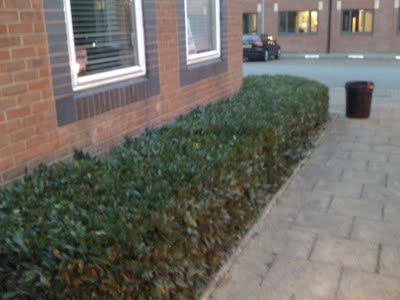 Commercial Lawn Cutting and Grounds Maintenance In Leicestershire